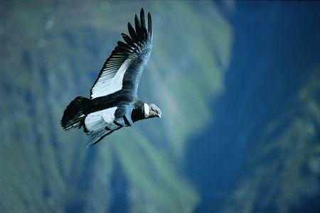 condor-arequipa.jpg