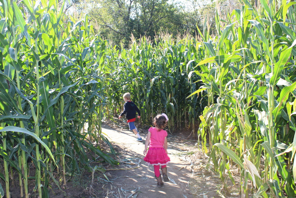 Brecken and Madiana trying to find their way out of the corn maze