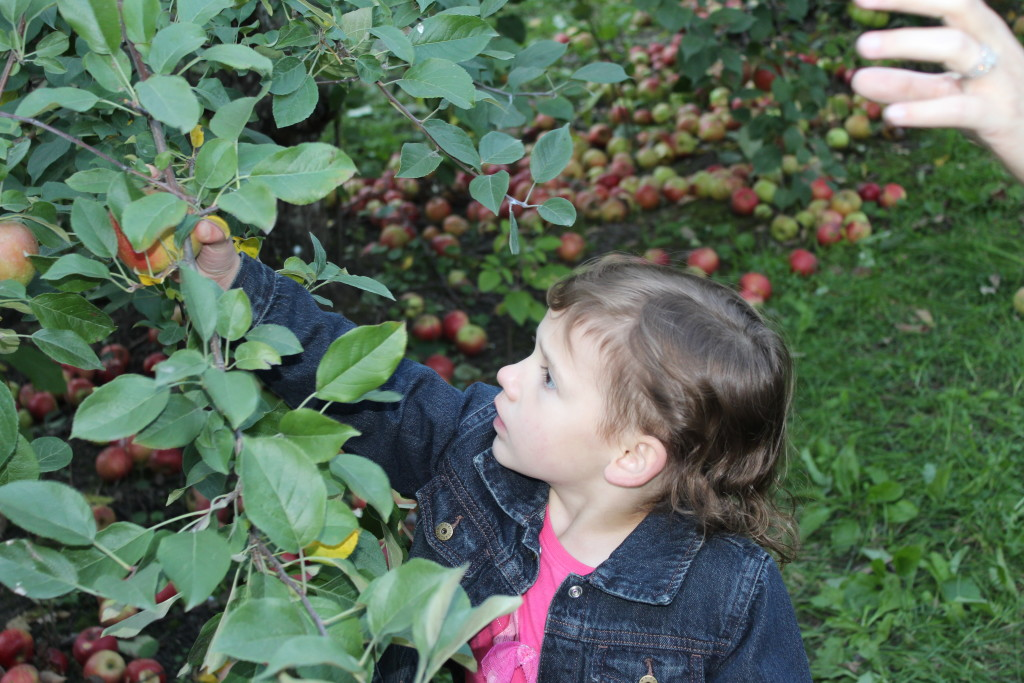 Madiana searching for the perfect apple